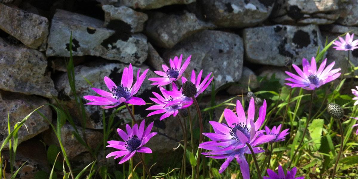 Visita I giardini di Pomona - Cisternino