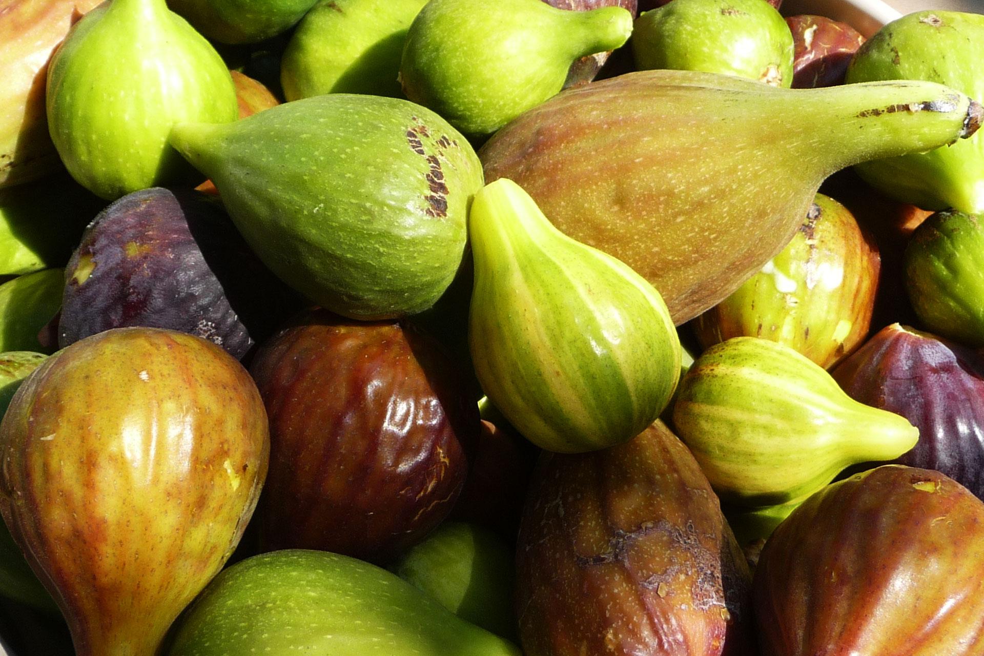 Collezione Ficus carica - I giardini di Pomona - Cisternino