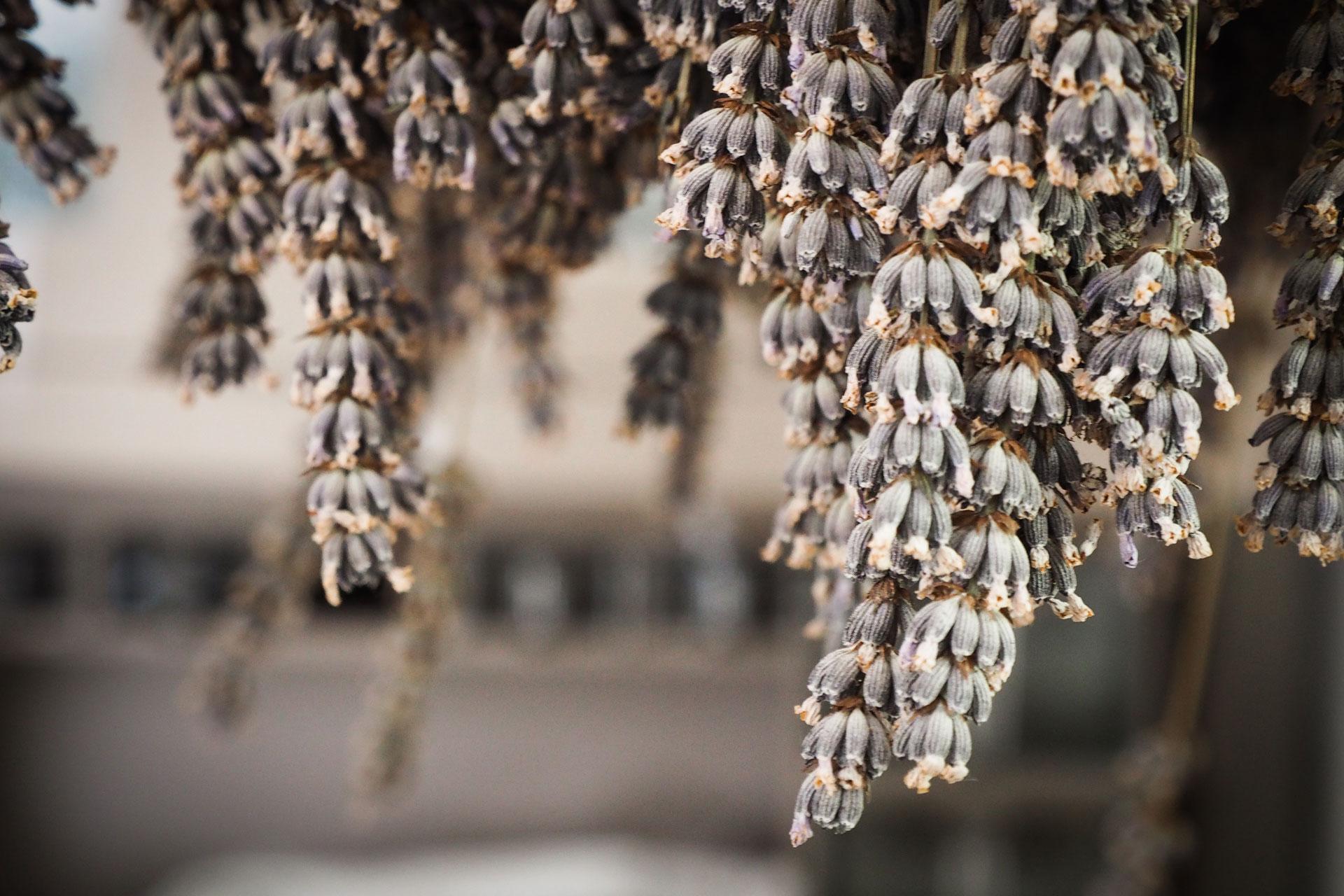 Soggiorna nei Giardini di Pomona - Cisternino