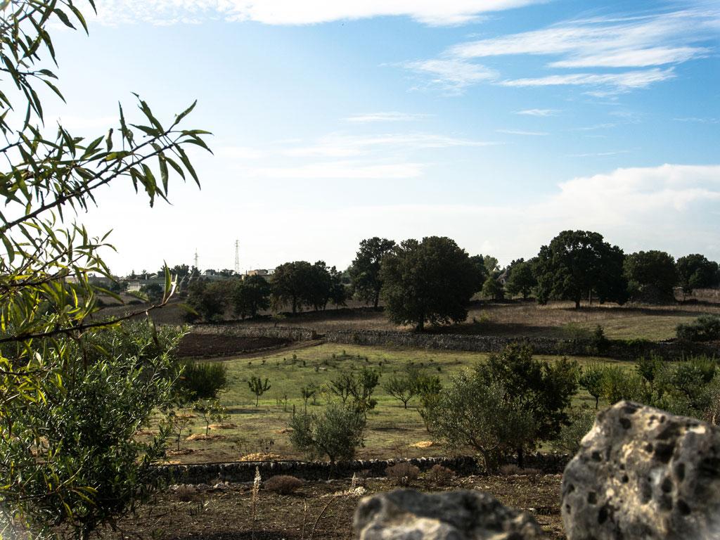 Vista su alberi da frutto - I giardini di Pomona - Cisternino