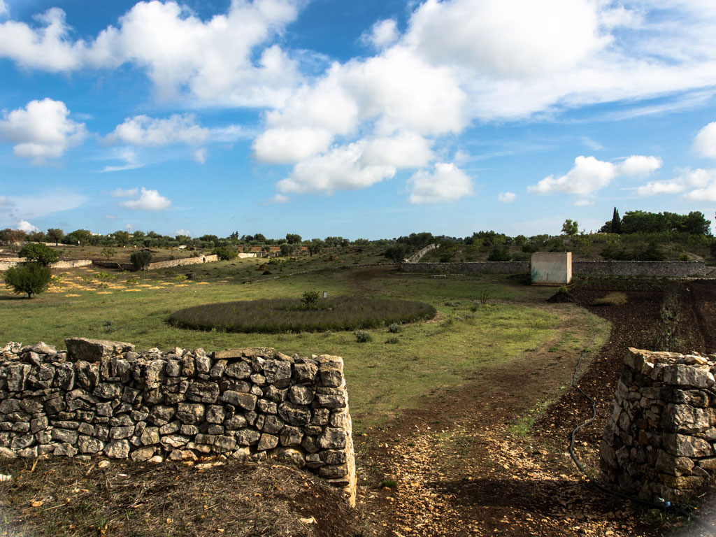 Vista sul labirinto di lavande - I giardini di Pomona - Cisternino