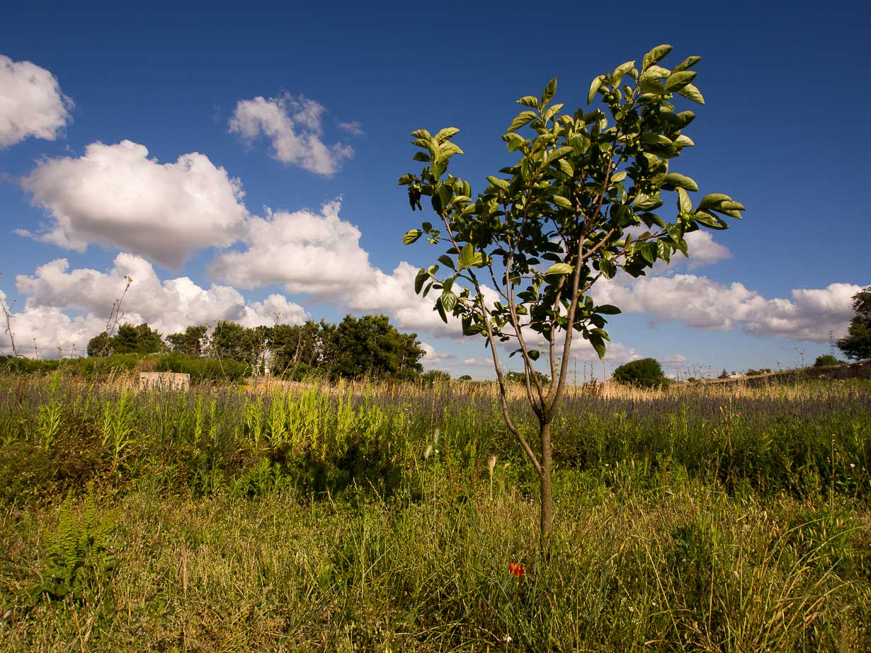 La rinascita del tempo - Kaki Tree Project