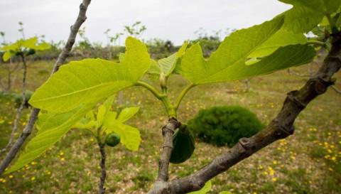 La biodiversità negli alberi da frutto - I giardini di Pomona