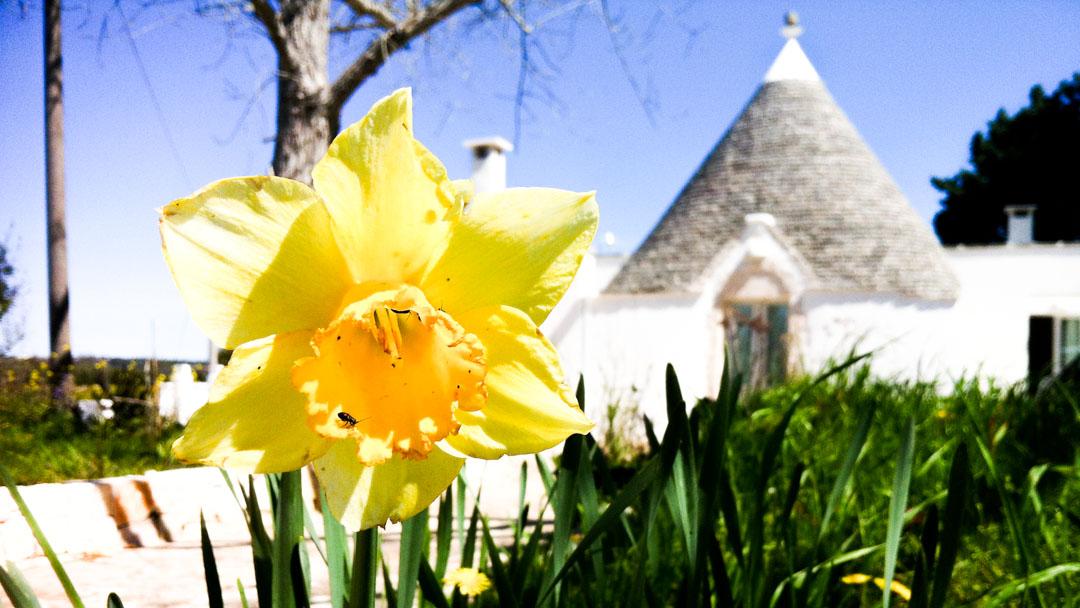 Narciso e case dei Giardini di Pomona