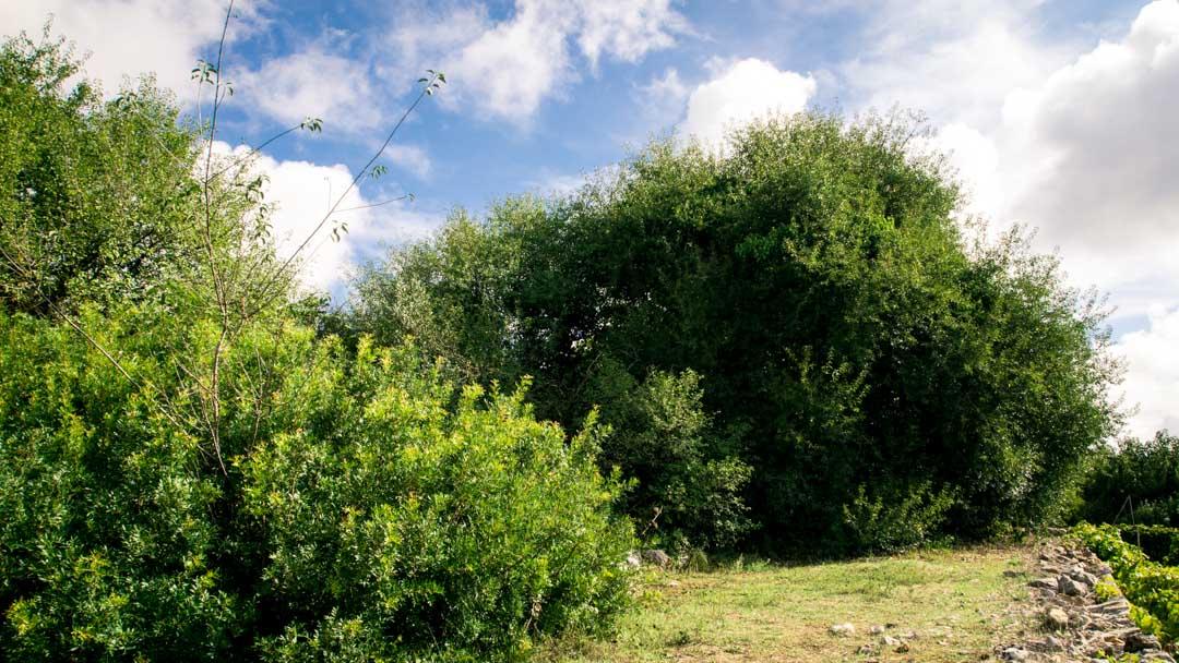 Aula didattica del Conservatorio botanico I giardini di Pomona